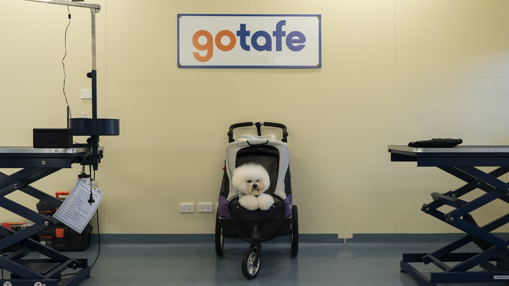 GOTAFE Dog grooming dog