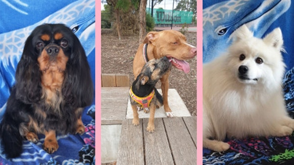 Humans of GOTAFE: Pawfect Style Pet Salon
