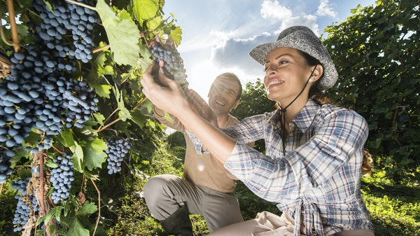 Viticulture & Winemaking